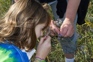 Junior naturalist examining flower