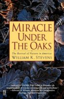 Miracle_Under_the_Oaks